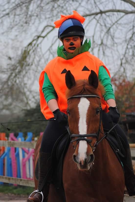 Walnut Equestrian 2