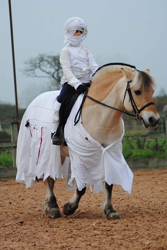 Walnut Equestrian 4