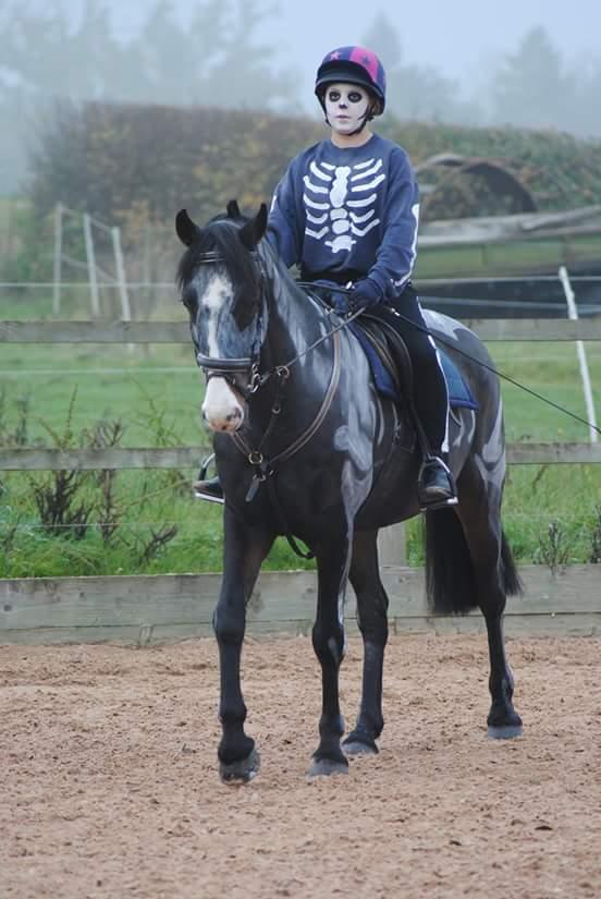 Walnut Equestrian 9
